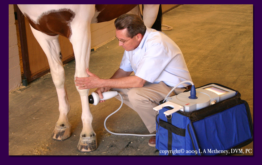 dr metheney administering shock wave therapy on an injured performance horse